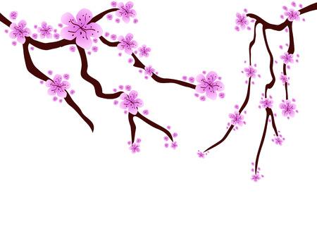 ciruela: flor de la ciruela hermoso significa la llegada de la primavera
