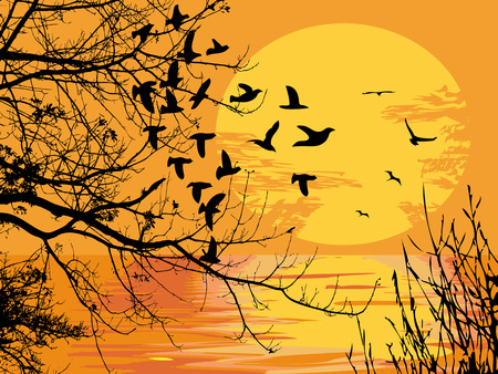 birds lake: beautiful landscape of sunset scene  Illustration