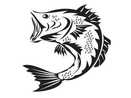 spigola: bass fishing schizzo disegnato su sfondo bianco