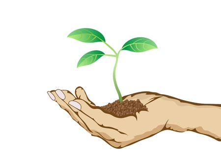 hands holding tree: green plant growing in hand Illustration