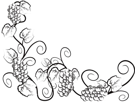 cluster: Grape vine background with copy space  Illustration