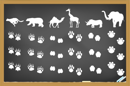 rhinoceros: some animals footprints drawing on blackboard