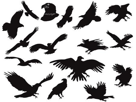 a large bird of prey: il set di silhouette eagles