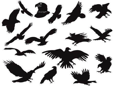 the set of eagles silhouette  Vector