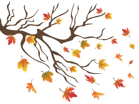 blowing wind: the background of maples falling