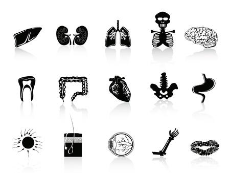 животик: набор человеческих органов значок для анатомии