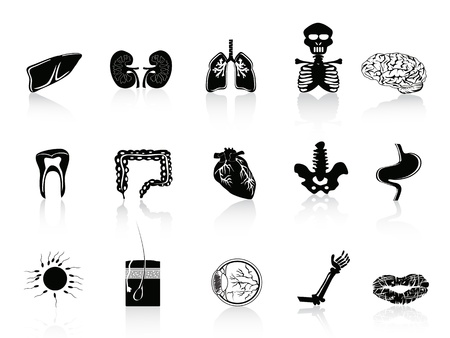human bones: set of human organs icon for anatomy