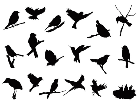 nestling birds: set of bird silhouettes collection