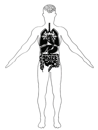 large intestine: human anatomy in black & white version