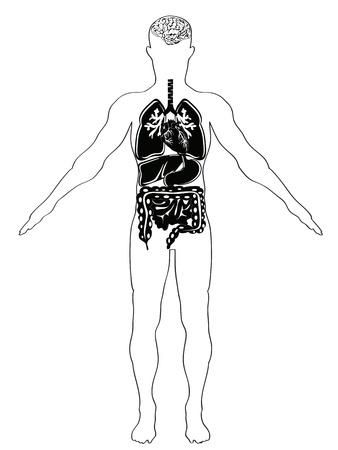 intestino grueso: la anatomía humana en la versión en blanco y negro