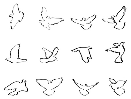 isolated some pigeons and doves on white background  Vector