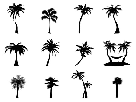 coconut palm: black Silhouette of palm trees on white background  Illustration