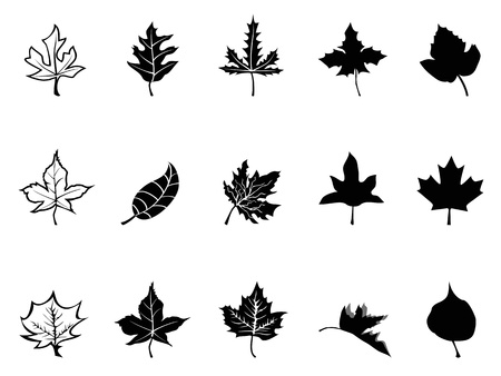 leaves falling: Isolated Black Maple leaves silhouette from white background Illustration