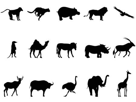 struś: izolowane afryka zwierzęta sylwetki z białym tle Ilustracja