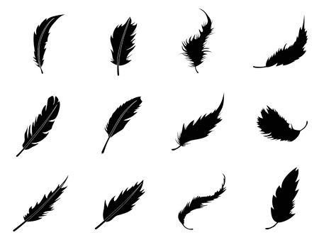 black bird: isolated feather Silhouettes from white background