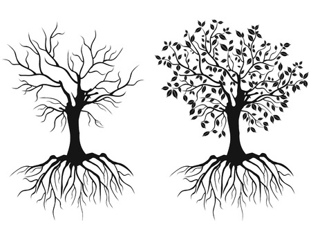life and death: isolated trees with roots in spring and autumn from white background