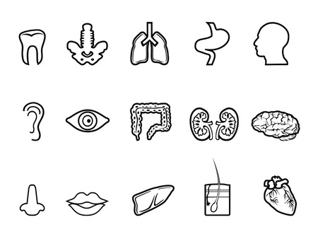 partes del cuerpo humano: aislado negro icono contorno humano anatomía de fondo blanco