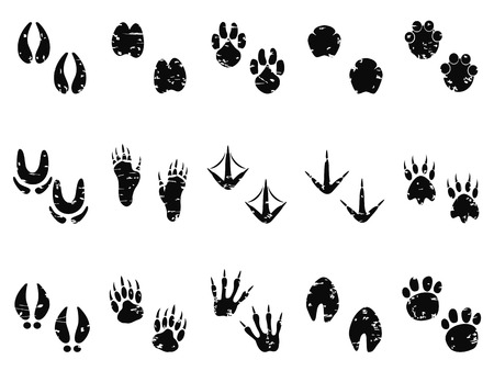 isolated black grungy Animal Footprint Track icon from white background Vector