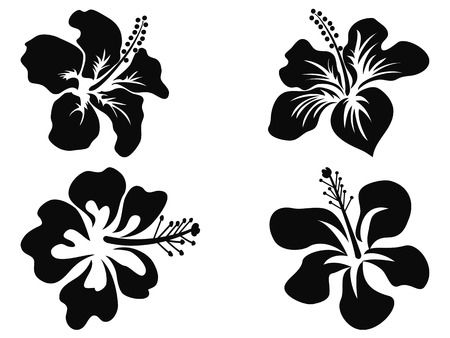 oriental: isolated black Hibiscus vector silhouettes on white background
