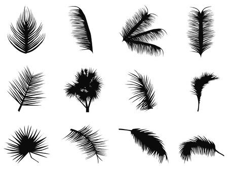 isolé palmier noir laisse silhouettes de fond blanc