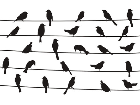 flock of birds: isolated silhouette of birds on wires from white background
