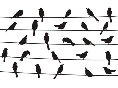 dessin noir et blanc: silhouette isolée des oiseaux sur les fils de fond blanc