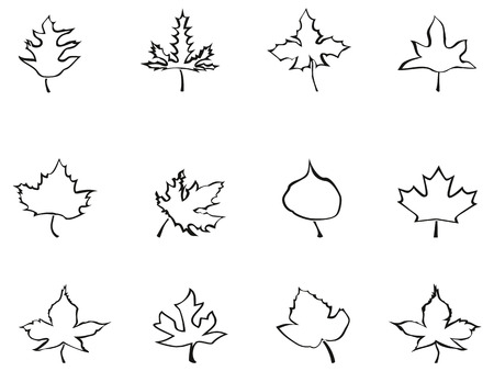 backgroud: isolated maple outline stylized leaves from white backgroud
