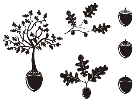 isolated oak acorn silhouettes set from white background 版權商用圖片 - 45293399