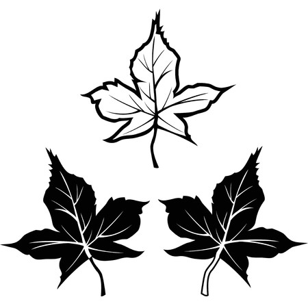 Isolated black maple leaf shape outline contour icons from white background