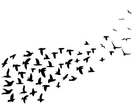 isolated black flock birds flying from white background Stock Illustratie