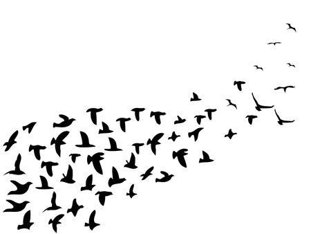 isolated black flock birds flying from white background 向量圖像
