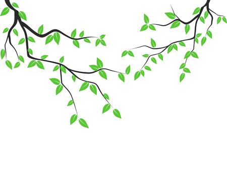 Feuilles vertes isolées branche d'arbre de fond blanc Vecteurs