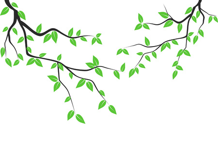 isolated green leaves tree branch from white background