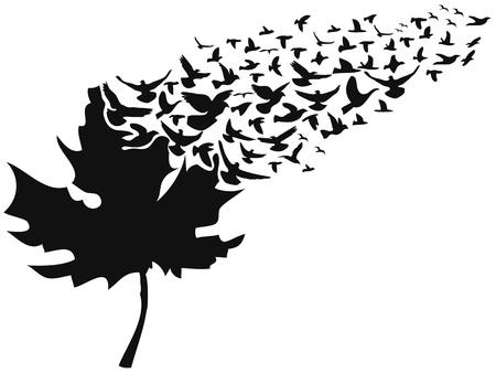 isolated birds flying away maple leaf on white background