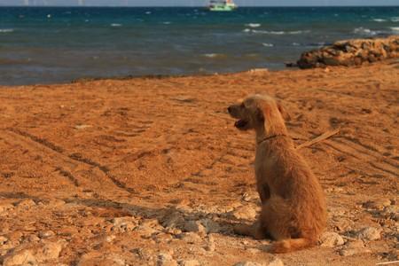 Lonely dog Stock Photo - 7732639