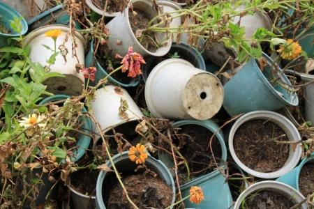 Dried plants Standard-Bild