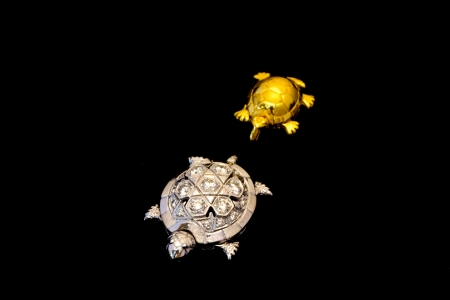 Little gold turtle follows a silver turtle Stock Photo - 17242639