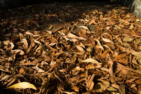 Dried leaves on the ground with sunlight Stock Photo