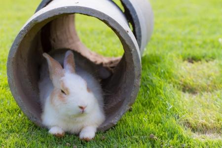 Cute fluffy rabbit in a tube