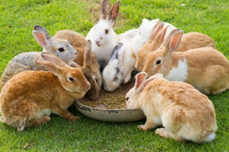 Group of rabbits eating food in the garden