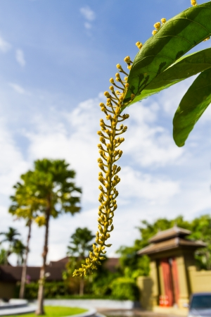 ordelijk: ordelijke lenige gele bloem op eigentijdse plek