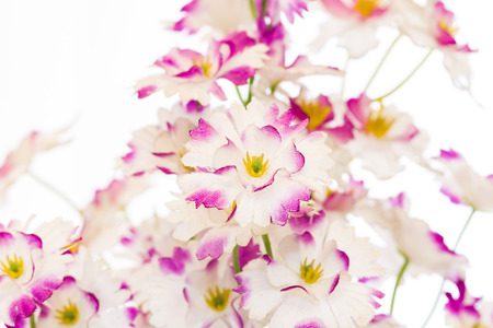 counterfeit: little counterfeit flower decorated at home Stock Photo