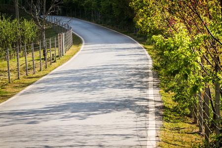 shady: shady road with green tree beside