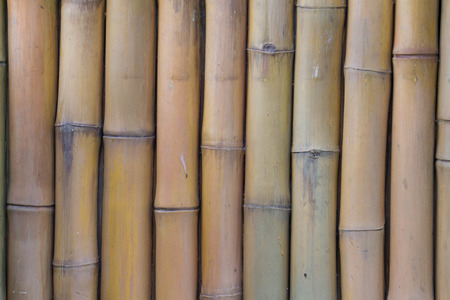 fench: dried yellow bamboo wood wall Stock Photo