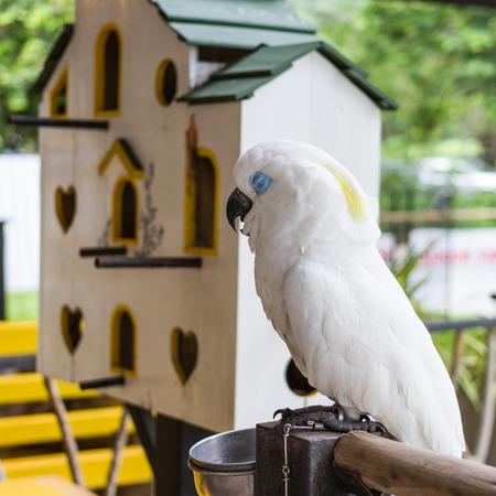 blue eye: sleeping white parrot  with blue eye