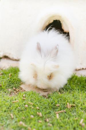 white fluffy rabbits in garden