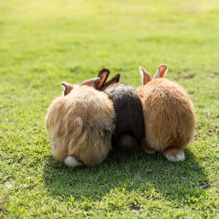 baby ass: bottom of triple cute rabbits in garden Stock Photo