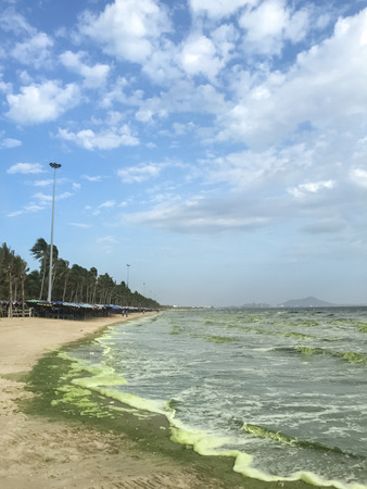 plancton: verde mar causada por el fitoplancton en Bangsaen, Tailandia