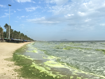 green sea: green sea caused by phytoplankton at Bangsaen, Thailand Stock Photo