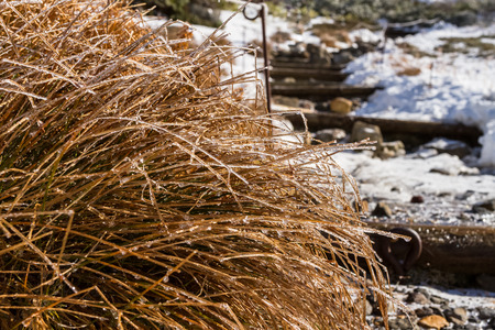 implications: ice and snow on dried brown bush